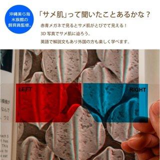 沖縄美ら海水族館オリジナル * サメのふしぎ とびだす!サメ肌図鑑 *