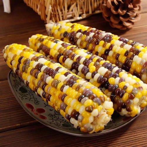 【冷凍】粘玉米ー紫玉米(2棒入り)