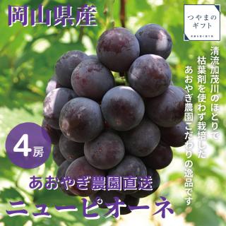 岡山県産ニューピオーネ(9月以降より順次出荷)