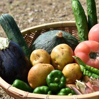 リピート率No.1☆贈り物にも☆須賀川産 季節の野菜セット