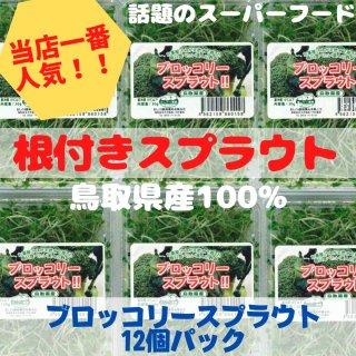 【人気!】ブロッコリースプラウト 12パックセット
