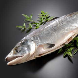 北海道産 新巻鮭一本物 約4.0kg 送料無料