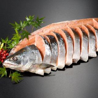 天然時鮭一本物 姿切り約2.3kg 送料無料