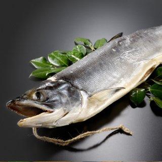 北海道産 新巻鮭寒風干し一本物 約2.0kg 送料無料