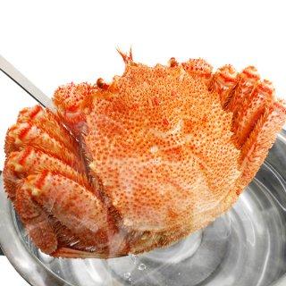 北海道産 ボイル毛がに 超特大約800g 送料無料
