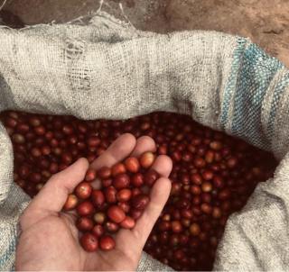 ウガンダ産 フルーツフレグランス「カセセ」