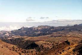 エチオピア産伝説の原生種「アビシニアンモカ9センチュリー」