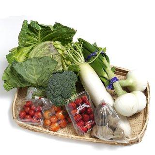 南房総の野菜 詰め合わせ 約8個入り
