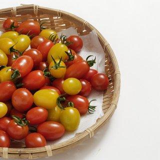 ミニトマト 1kg入り