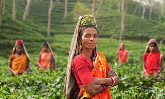 インド紅茶農園への直接支援