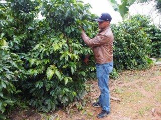Dominica ルイス・フェルナンデス農園 中深煎り