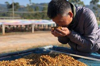 Myanmar Ywangan レッドハニー 中煎り