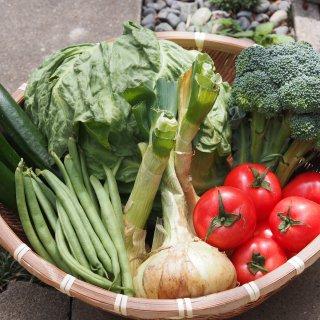 農薬・化学肥料不使用 旬のとれたて野菜10品目