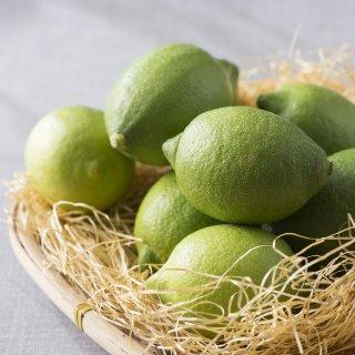 奄美大島 国産レモン 1.2kg