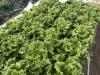 野菜・農産加工品
