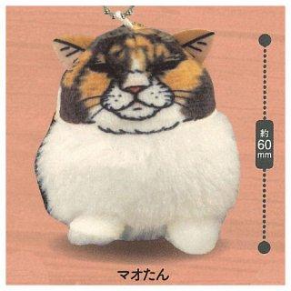 世にも不思議な猫世界 ぽってり!可愛いマスコット [2.マオたん]【 ネコポス不可 】【C】