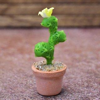ミニチュアパーツ 鉢植えミニサボテン [CT31] (1/12スケール) [m-s]【ネコポス配送対応】【C】