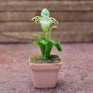 ミニチュアパーツ 鉢植え蘭(ラン) [ORP2] (1/12スケール) [m-s]【ネコポス配送対応】【C】