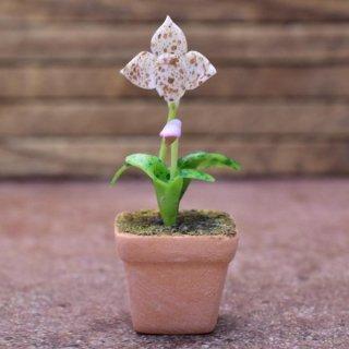ミニチュアパーツ 鉢植え蘭(ラン) [ORP4] (1/12スケール) [m-s]【ネコポス配送対応】【C】