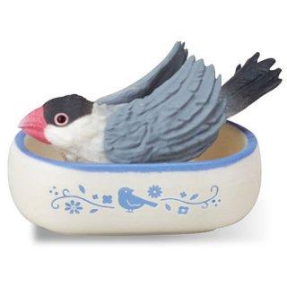 文鳥ライフ [4.水浴び中(桜文鳥)]【ネコポス配送対応】【C】