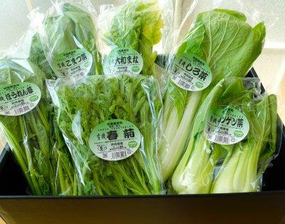 「山口さんの鍋やさいセット」奈良県 葉野菜とハーブの山口農園 送料込