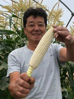 「西村さんちの白いとうもろこし」6本 京都 西村農園 送料込