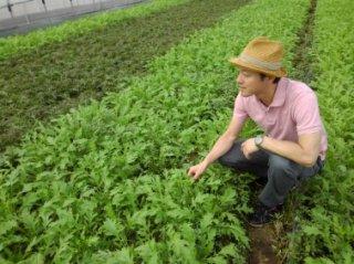 「山口さんのサラダ野菜セット」奈良県 葉野菜とハーブの山口農園 送料込