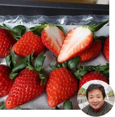 希少!!極上のいちご「苺 女峰」香川県 いちご家めい 多田さんより 18粒 ギフトにぜひどうぞ!(送料込)