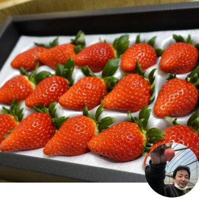 最高峰の苺「極み」女峰 香川県 いちご家めい 「多田さんの苺」 15粒 贈答品にも 送料込