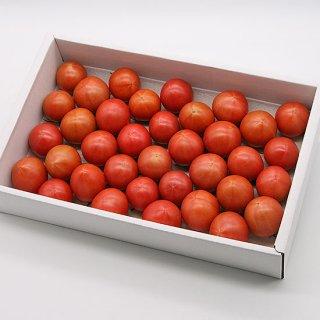 有さんのフルーツトマト 1.5kg