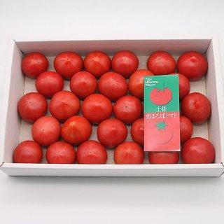 土佐まほろばトマト 1.5kg