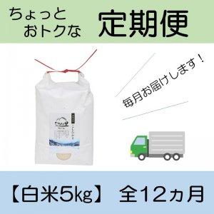 定期便 コシヒカリ 【白米5kg】 全12ヵ月