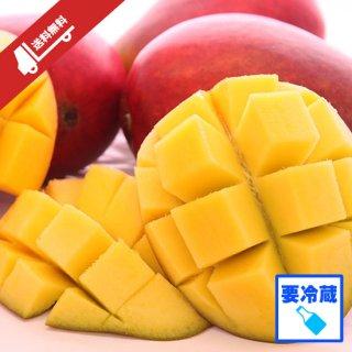 【冷蔵】マンゴー1�(ご家庭用・約2〜4玉・送料無料)