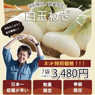 【浜松篠原産】白たまねぎ 葉付き2個入り7袋 贈答用 送料無料