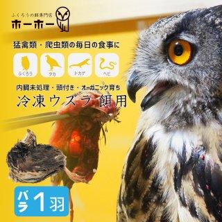 ウズラ バラ売り1羽 餌用 頭付き内臓未処理 オーガニック育ち【冷凍配送】