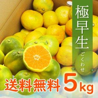【9月頃販売開始予定】【贈答用】有田みかん5kg