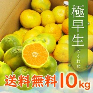 【9月頃販売開始予定】【贈答用】有田みかん10kg