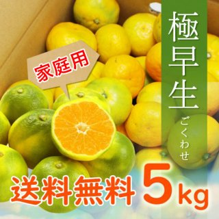 【7月頃予約販売開始予定】【家庭用】有田みかん5kg