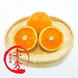 【3月頃販売開始予定】【贈答用】清見オレンジ5kg