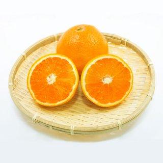 【1月頃予約販売開始予定】【家庭用】清見オレンジ5kg