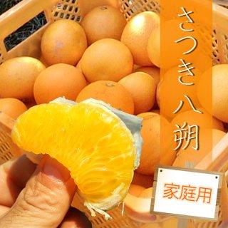 【1月頃予約販売開始予定】【家庭用】さつき八朔5kg