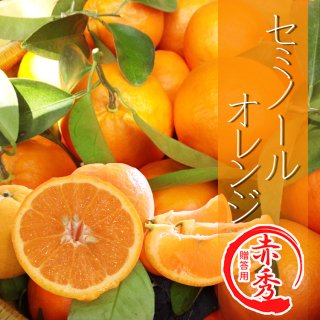 【贈答用】セミノールオレンジ5kg
