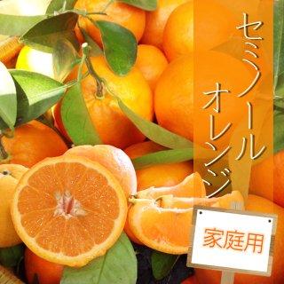 【家庭用】セミノールオレンジ5kg
