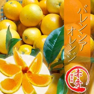 【予約販売/5月下旬以降発送】【贈答用】バレンシャオレンジ5kg
