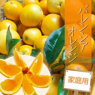 【予約販売/5月下旬以降発送】【家庭用】バレンシャオレンジ5kg