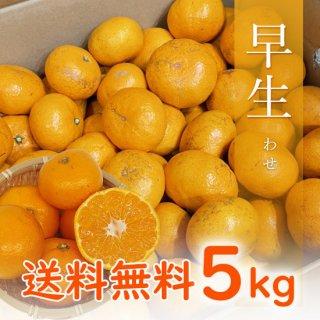 【贈答用】有田みかん 早生みかん 5kg【11月中旬出荷予定 予約受付中】