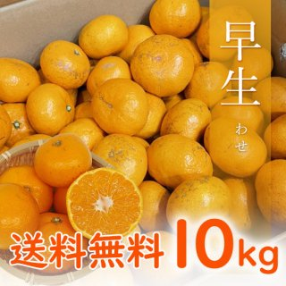 【贈答用】有田みかん 早生みかん 10kg 【11月中旬出荷予定 予約受付中】