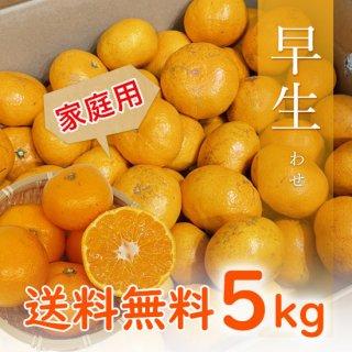 【家庭用】有田みかん 早生みかん 5kg 【11月中旬出荷予定 予約受付中】