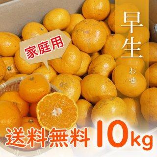 【家庭用】有田みかん 早生みかん 10kg 【11月中旬出荷予定 予約受付中】