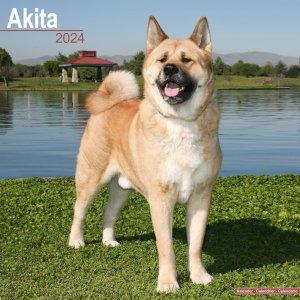 Avonside 秋田犬